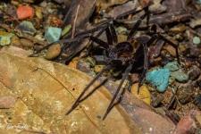pajki/spiders