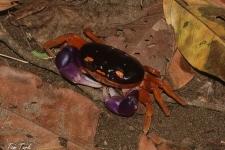 raki/crustaceans