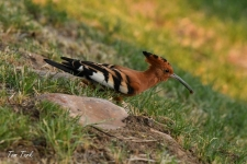 ptiči/birds