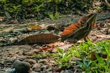 plazilci/reptiles