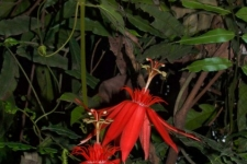 rastline/plants